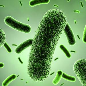 BIOM8 Probiotic Repair Spray - Usage Instructions