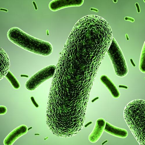 Probiotic Repair Spray Usage Instructions - BIOM8